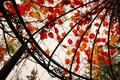 Картинка осень, листья, беседка