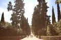 Картинка люди, деревья, дорога, аллея, зелень, лето