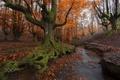 Картинка осень, природа, Испания, баския