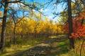 Картинка осень, лес, деревья, рельсы