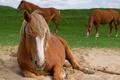 Картинка природа, кони, лето