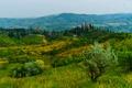 Картинка луга, Brisighella, поля, Италия, деревья, кусты, трава