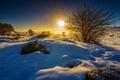 Картинка лучи, снег, зима, деревья, кусты, поле, солнце