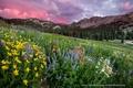 Картинка лес, цветы, горы, природа.небо