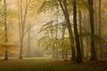 Картинка осень, лес, листья, солнце, деревья, туман, ветви