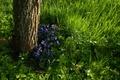 Картинка зелень, трава, цветы, дерево, весна, анютины глазки
