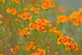Картинка цветы, стебли, лепестки, боке