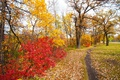Картинка багрянец, листья, дорожка, деревья, парк, осень