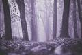 Картинка туман, деревья, кресты, могилы, листья, кладбища, осень