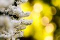 Картинка цветы, природа, белые, боке