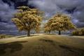 Картинка небо, трава, облака, деревья, Англия, фильтр, Восточный Чешир