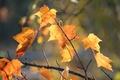 Картинка макро, осень, листья, природа
