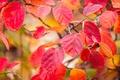 Картинка багрянец, ветка, макро, листья, осень