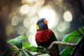 Картинка листья, ветка, попугай, окрас