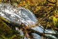 Картинка осень, лес, деревья, река, поток