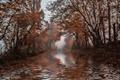 Картинка природа, река, осень