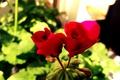 Картинка цветы, желтый, красный, зеленый