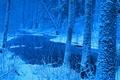 Картинка зима, лес, снег, Польша, Беловежская пуща, река Лютовня