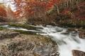 Картинка осень, лес, деревья, природа, река