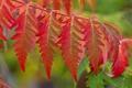 Картинка осень, листья, макро, цвет, ветка
