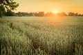 Картинка поле, природа, утро