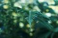 Картинка листья, растение, ветка