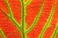 Картинка осень, природа, лист, текстура