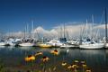 Картинка небо, цветы, бухта, яхты, лодки, гавань
