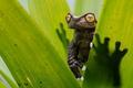Картинка лягушка, природа, листья