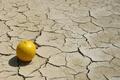 Картинка dry land, lemon, shadows