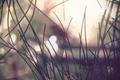 Картинка макро, свет, пейзаж, иголки, Природа, ель, сосна