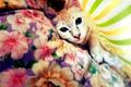 Картинка кот, взгляд, покрывало, kitten, cat, animal, cute