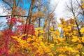 Картинка небо, облака, деревья, осень, листья, багрянец