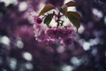 Картинка цветы, дерево, лепестки, боке