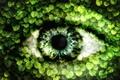 Картинка листья, природа, глаз