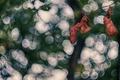 Картинка осень, листья, сухие, боке