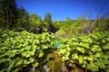 Картинка зелень, листья, деревья, озеро, водопады, Хорватия, Plitvice Lakes National Park