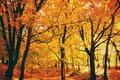 Картинка осень, листья, деревья, парк, солнечный свет