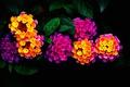 Картинка листья, природа, сад, соцветие