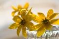 Картинка цветы, макро, фон
