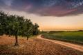 Картинка дорога, поле, деревья