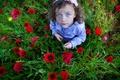 Картинка цветы, маки, девочка, голубоглазая