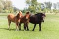 Картинка поле, животные, лошадки