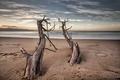 Картинка море, деревья, природа