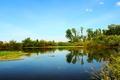 Картинка река, отражение, трава, небо.