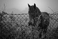 Картинка природа, конь, забор