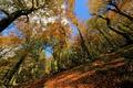 Картинка осень, лес, небо, деревья, склон