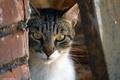Картинка кошка, кот, морда