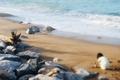Картинка песок, море, пляж, камни, прибой, ребёнок