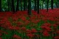Картинка лес, трава, деревья, цветы, вечер